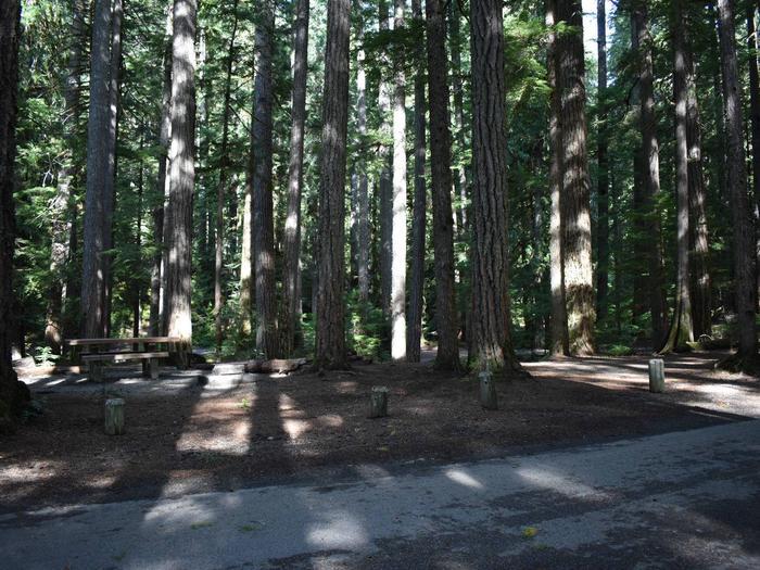 Ohanapecosh Campground - Site D022