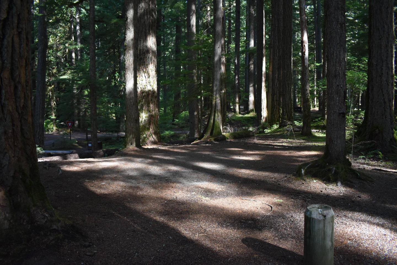 Ohanapecosh Campground - Site D022 Tent Space