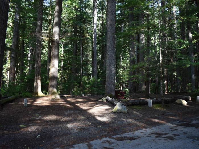 Ohanapecosh Campground - Site D023