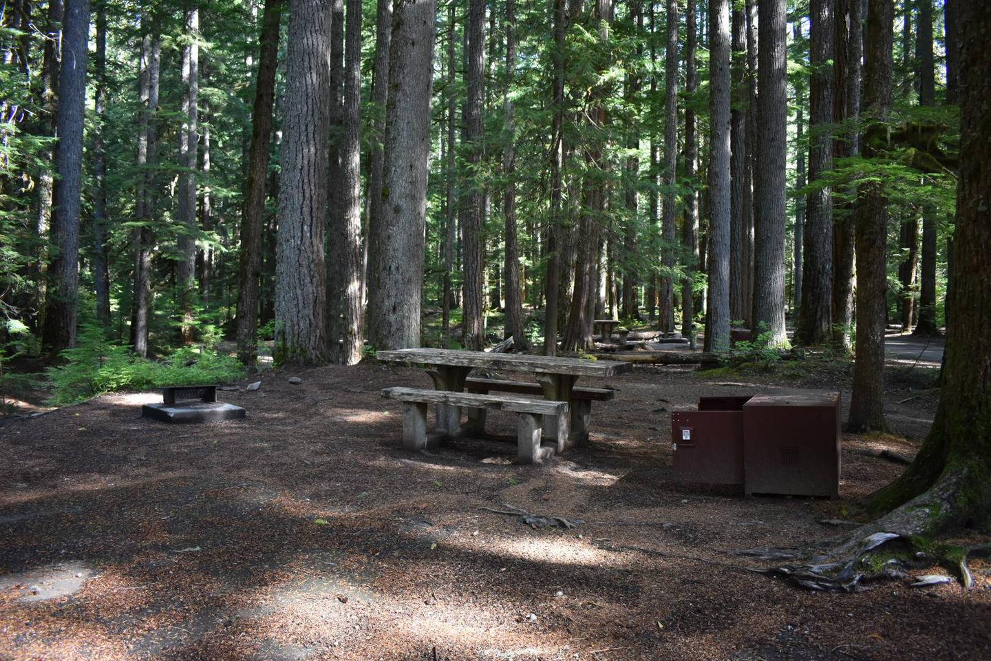 Ohanapecosh Campground - Site D023 AmenitiesCampers are provided with a picnic table, food storage box, and fire pit.