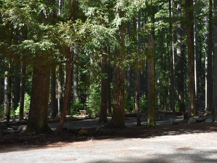 Ohanapecosh Campground - Site D024