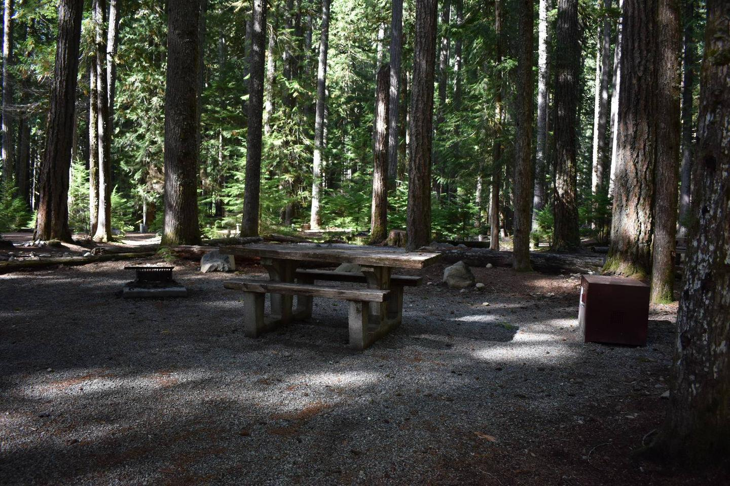 Ohanapecosh Campground - Site D024 AmenitiesCampers are provided with a picnic table, food storage box, and fire pit.