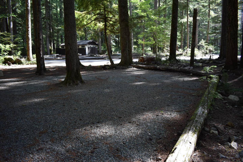 Ohanapecosh Campground - Site D024 Tent Space