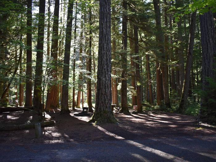 Ohanapecosh Campground - Site E002