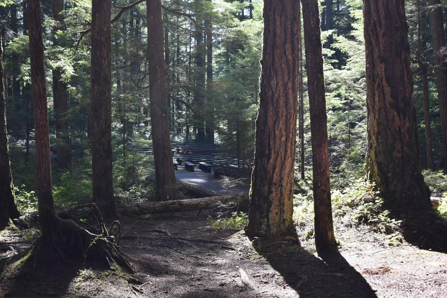 A short trail behind the campsite leads to the Ohanapecosh Campground Amphitheater.