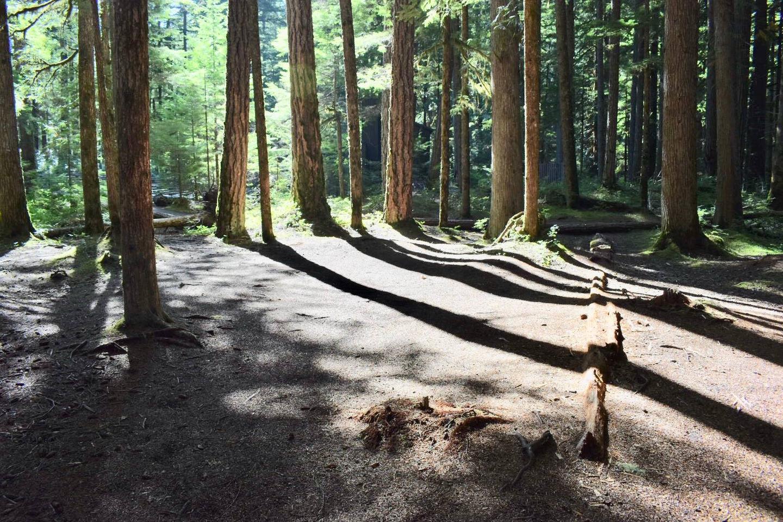 Ohanapecosh Campground - Site E002 Tent Space