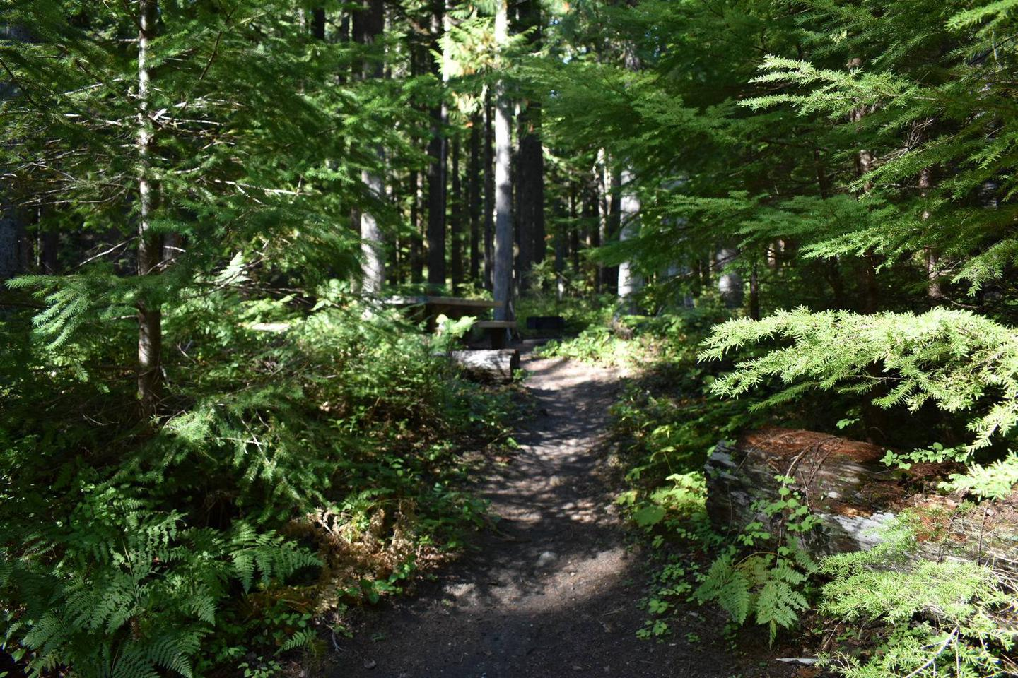 A short path leads from the parking area to the main campsite space.