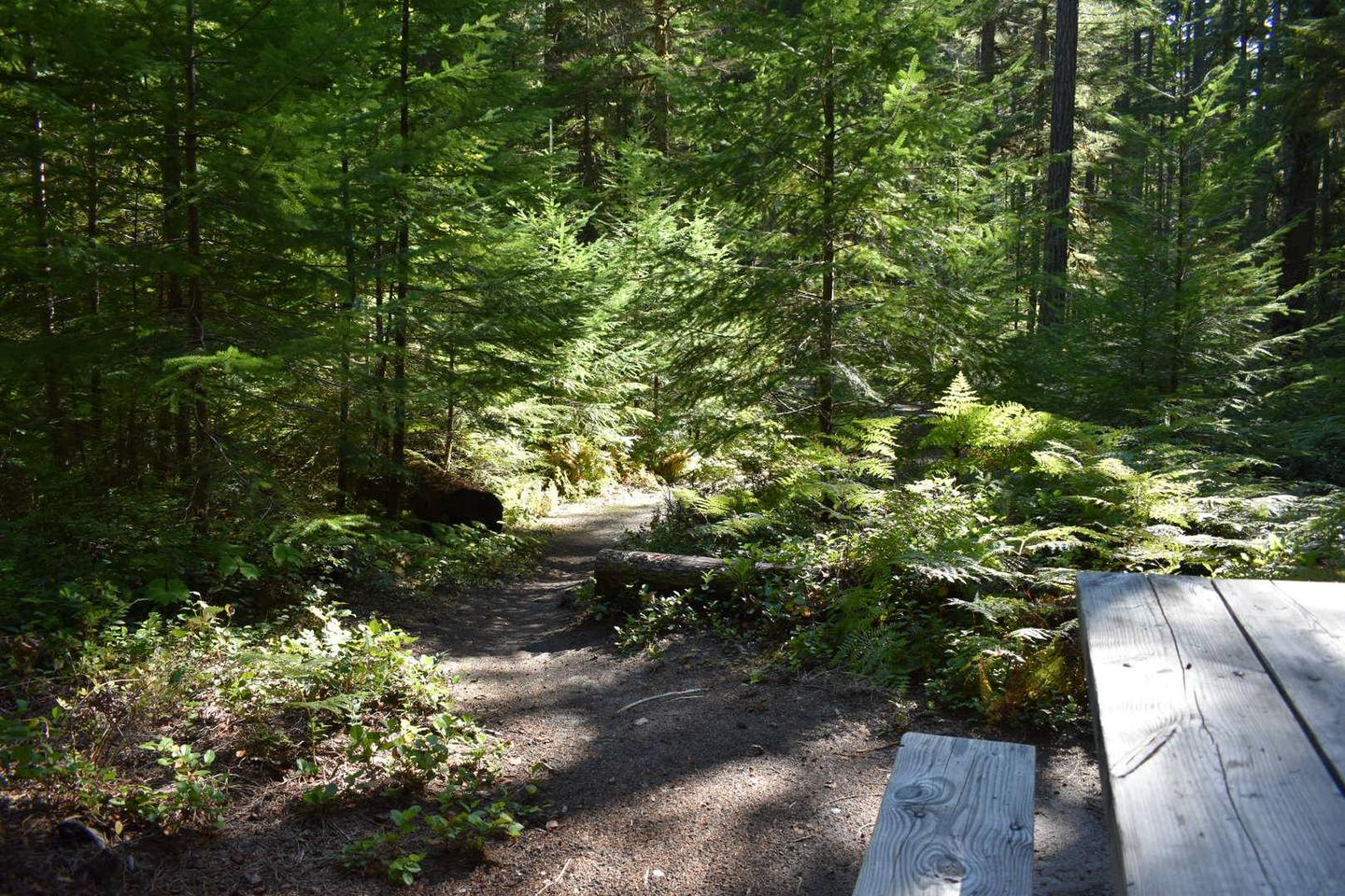 A view of the path leading back to the parking area from the campsite.