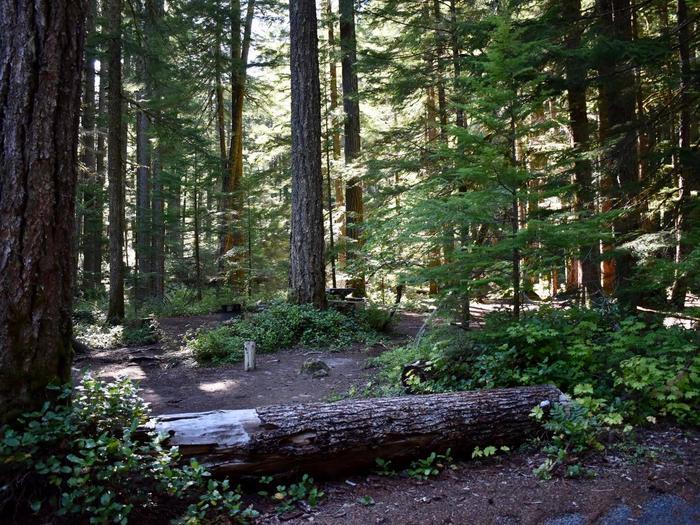 Ohanapecosh Campground - Site E005