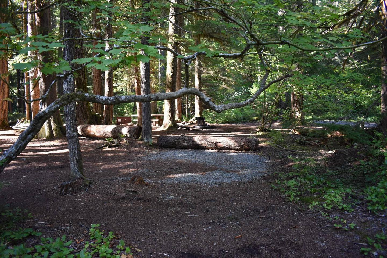 Ohanapecosh Campground - Site E005 Tent Space