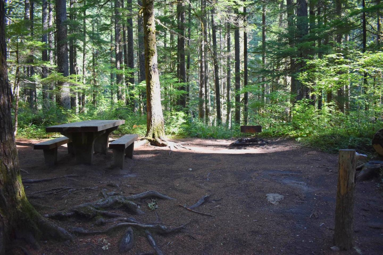 Ohanapecosh Campground - Site E008 Tent Space