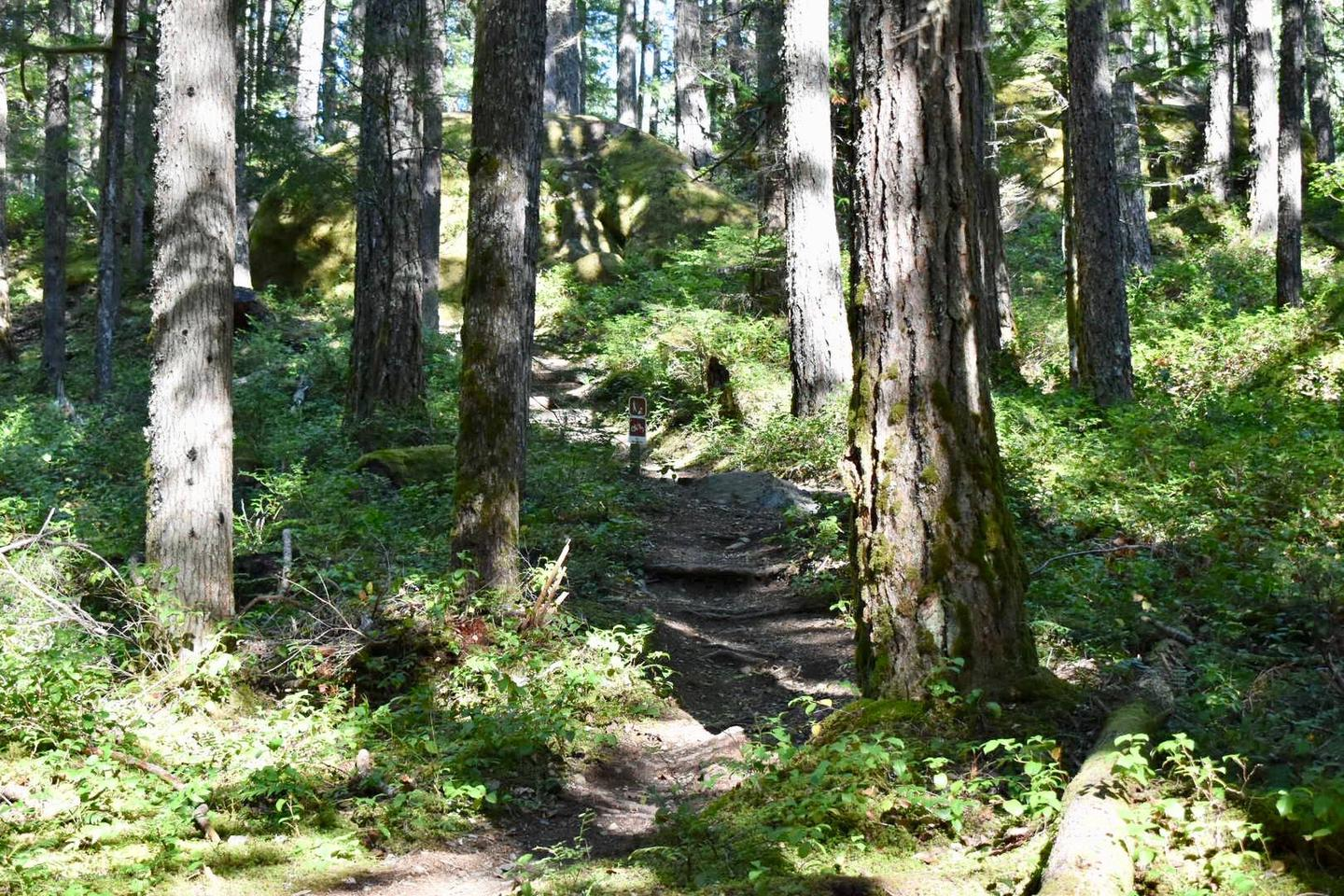 A short trail next to the campsite leads to the popular Silver Falls hiking trail.