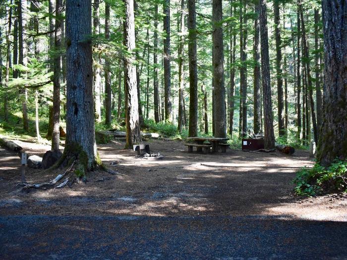 Ohanapecosh Campground - Site E009