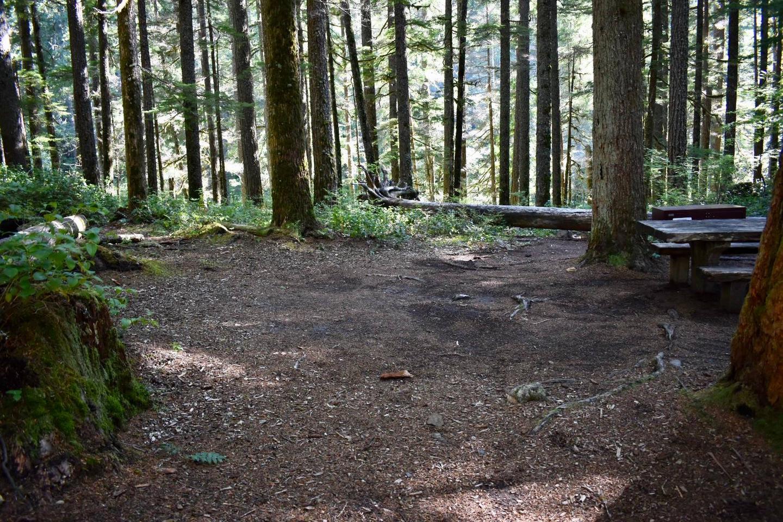 Ohanapecosh Campground - Site E009 Tent Space