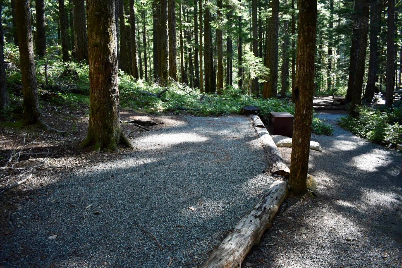 Ohanapecosh Campground - Site E011 Tent Space