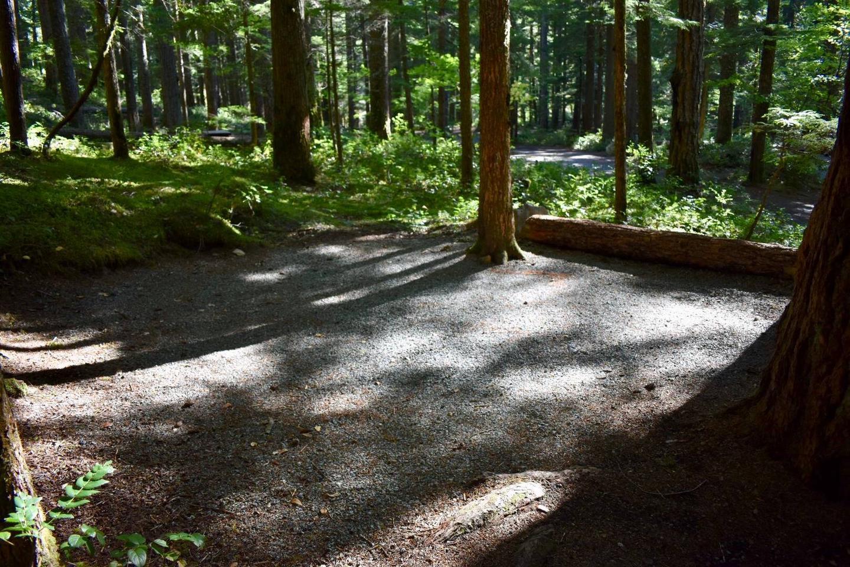 Ohanapecosh Campground - Site E014 Tent Space