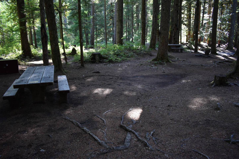 Ohanapecosh Campground - Site E015 Tent Space
