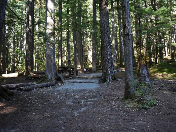 Ohanapecosh Campground - Site E018