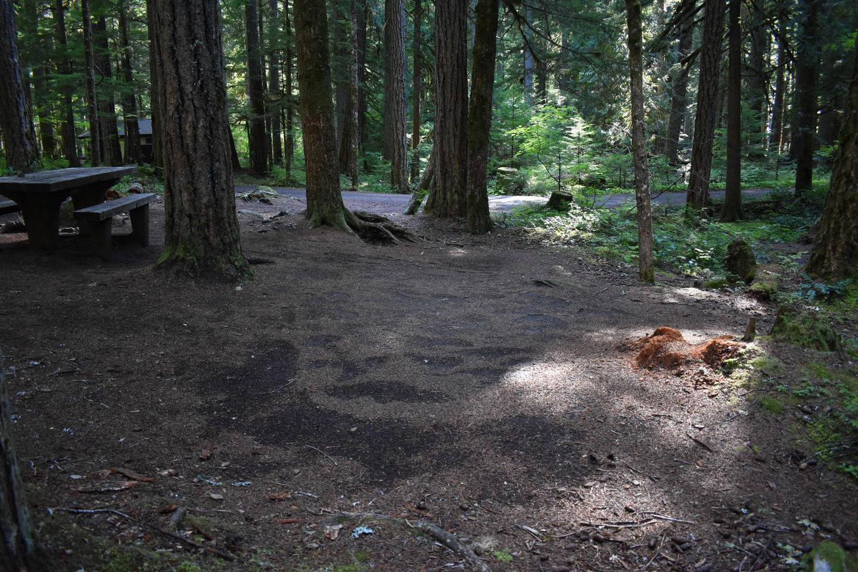 Ohanapecosh Campground - Site E019 Tent Space