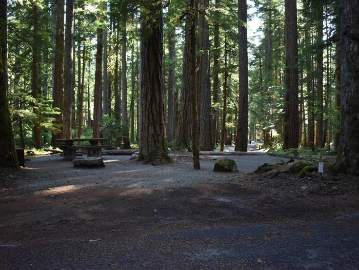 Ohanapecosh Campground - Site E020