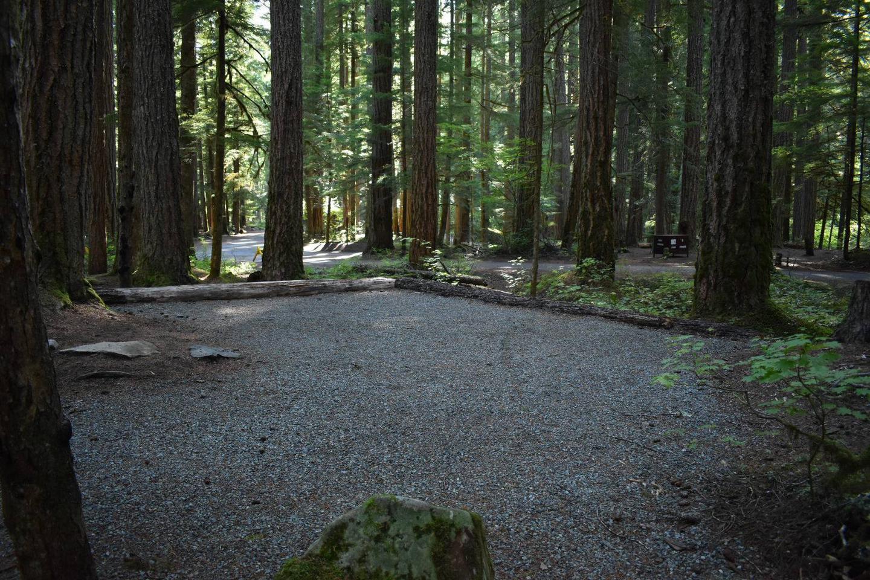 Ohanapecosh Campground - Site E020 Tent Space