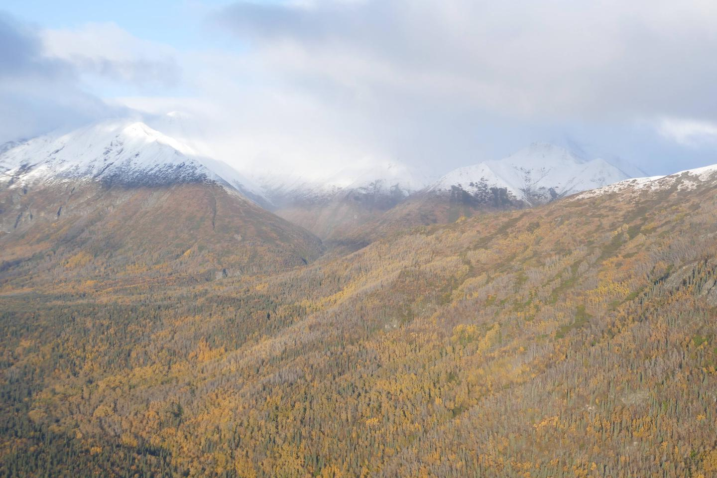 Snow capped peaks shrouded in clouds stand above a mixed forest in fall colors.Overview of the area traversed by the Portage Creek Trail adjacent to the cabin site.
