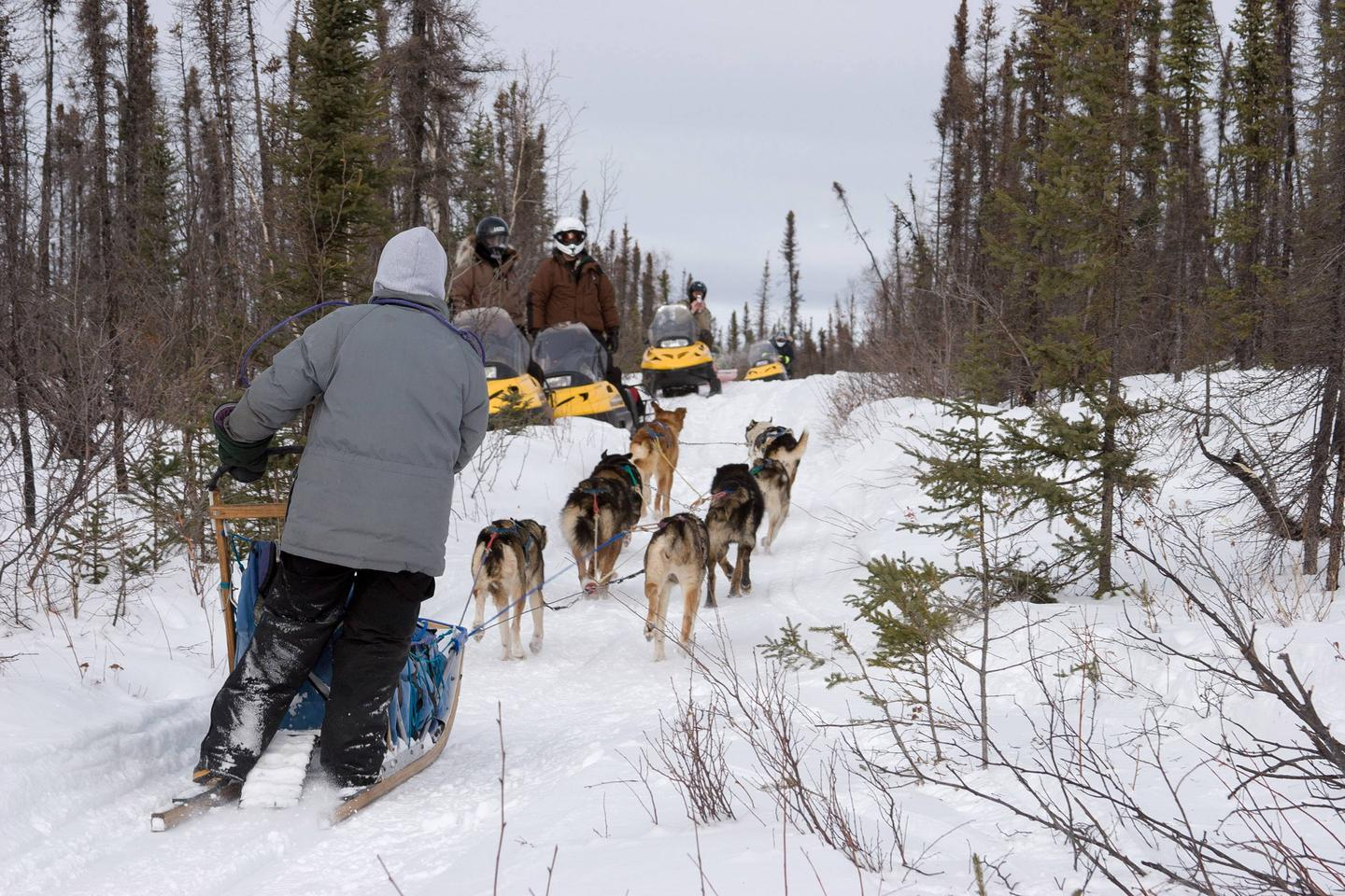 A musher and her dog team pass snowmobilers on a trail.White Mountains trails are multi-use, and visitors have a long history of sharing the trails with other users.