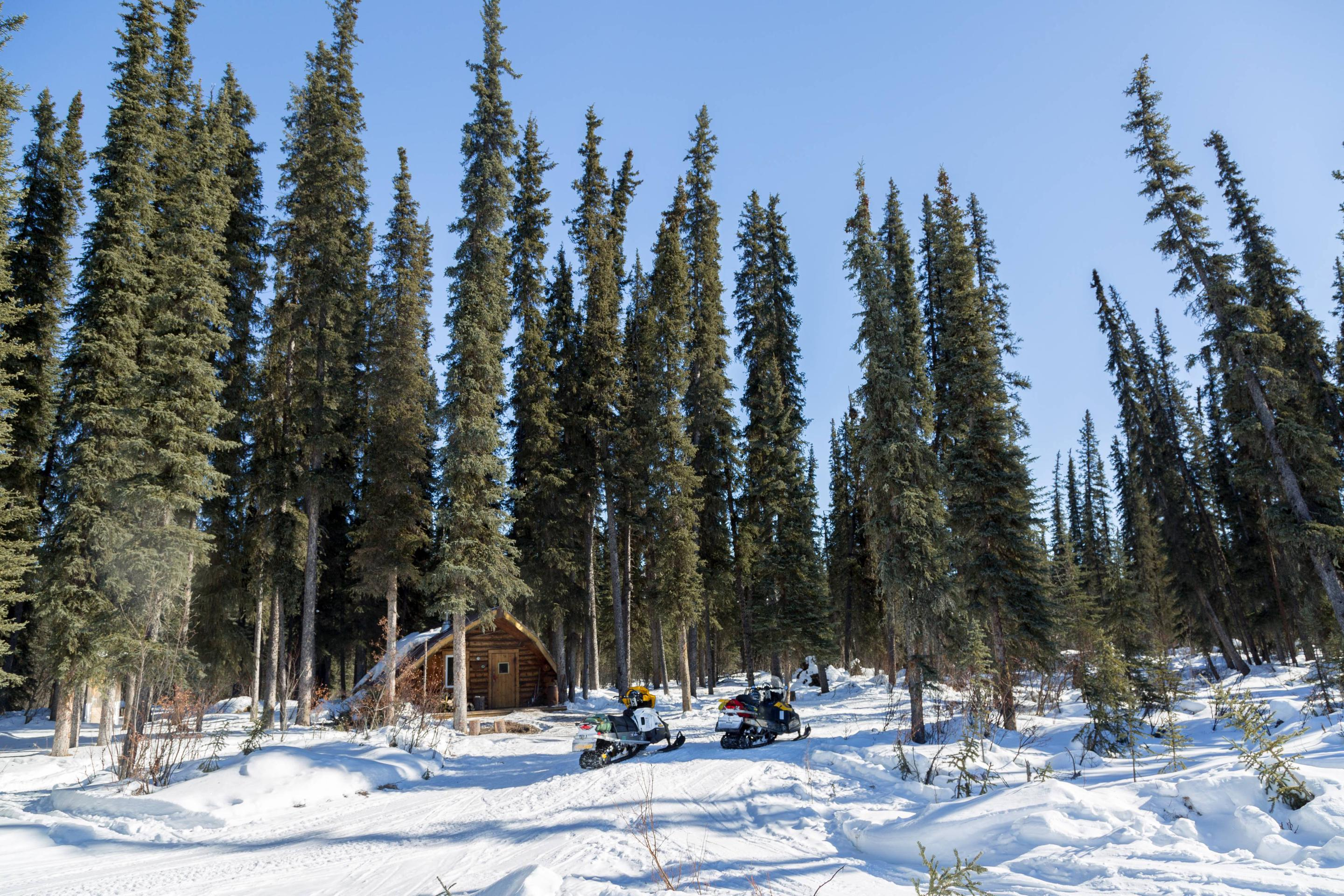 Winter view of a log cabin surrounded by tall treesRichard's Cabin is located in a grove of tall spruce trees.