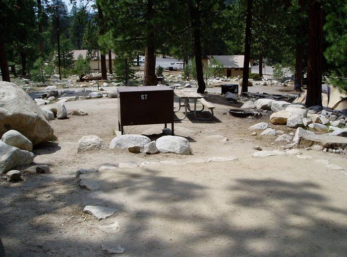 View looking across site # 67site # 67 D-Loop Lodgepole Campground