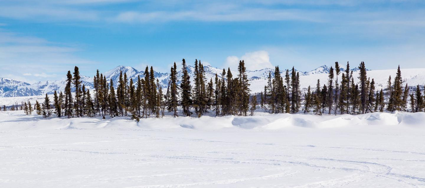 A line of spruce trees next to a frozen lake with mountainsView across the frozen lake next to Colorado Creek Cabin