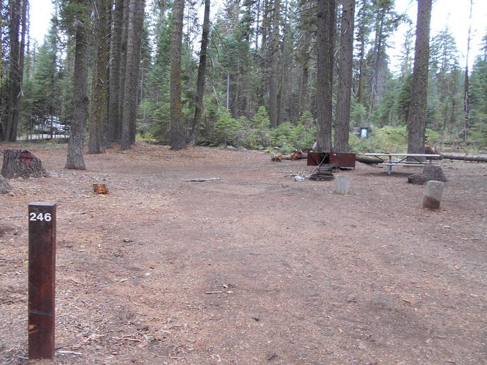 Site 246 Crane Flat