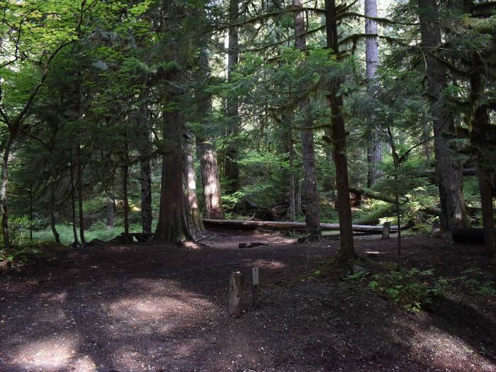 Ohanapecosh Campground - Site F001