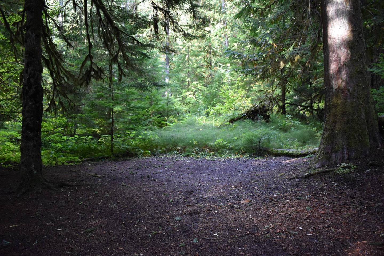 Ohanapecosh Campground - Site F001 Tent Space