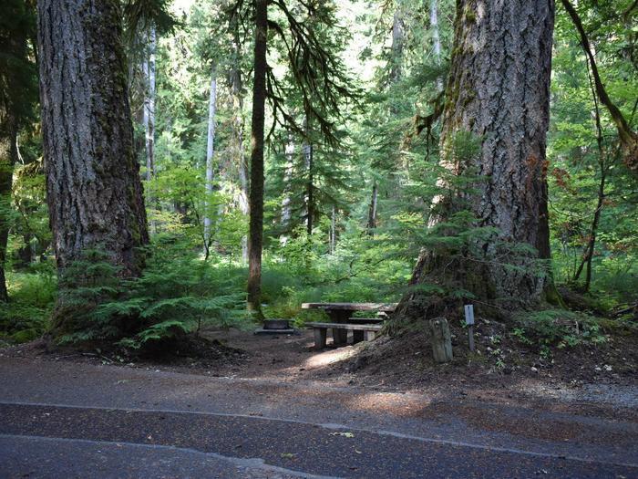 Ohanapecosh Campground - Site F002