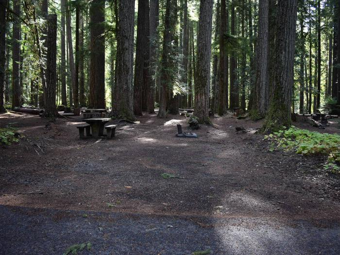 Ohanapecosh Campground - Site F004