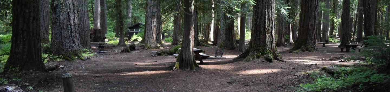 Ohanapecosh Campground - Site F007