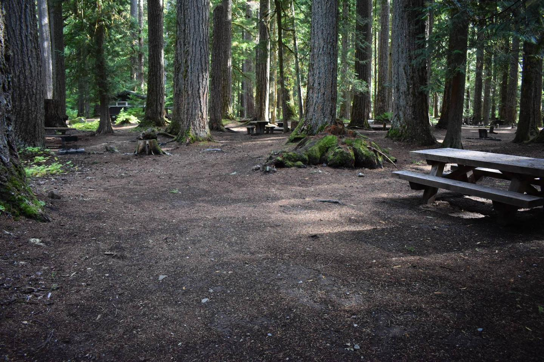 Ohanapecosh Campground - Site F007 Tent Space