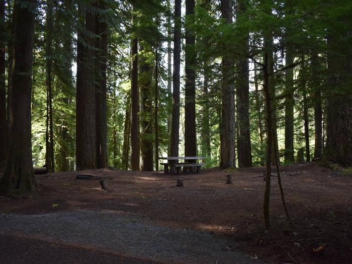 Ohanapecosh Campground - Site F008