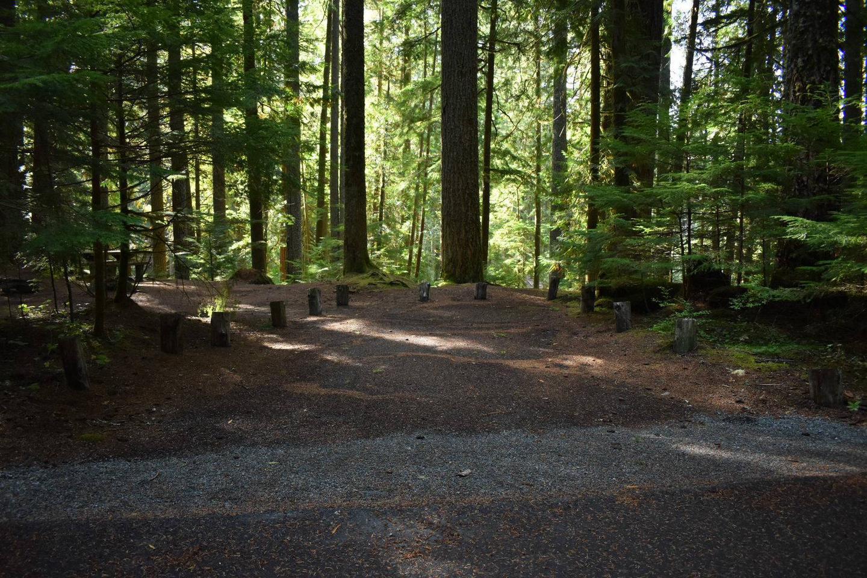 Ohanapecosh Campground - Site F009 Parking Area