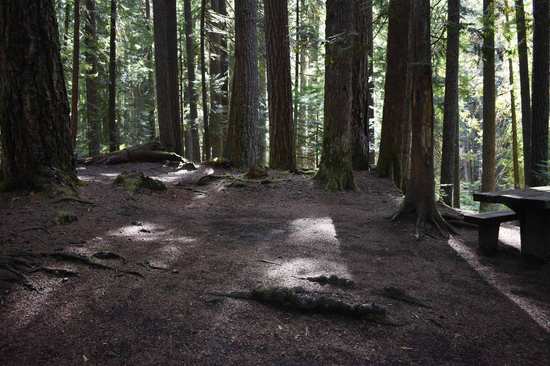 Ohanapecosh Campground - Site F009 Tent Space