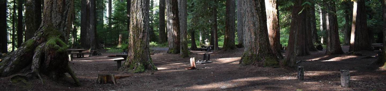 Ohanapecosh Campground - Site F012