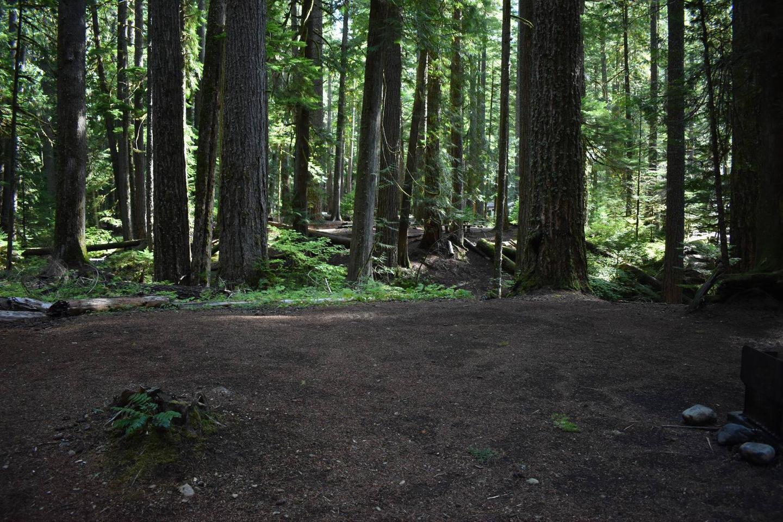 Ohanapecosh Campground - Site F013 Tent Space