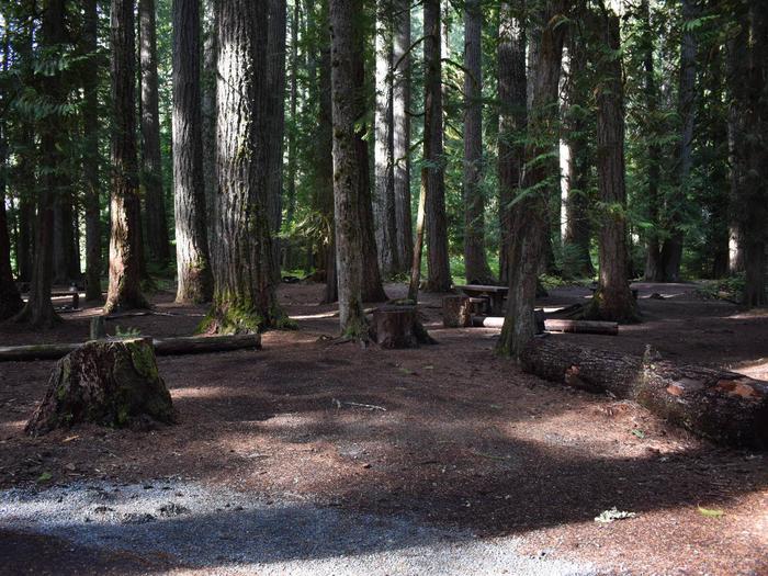 Ohanapecosh Campground - Site F014