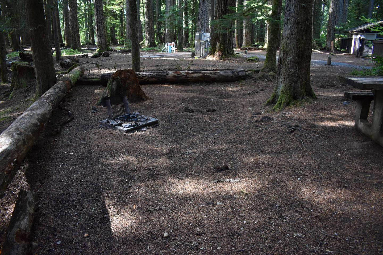 Ohanapecosh Campground - Site F016 Tent Space