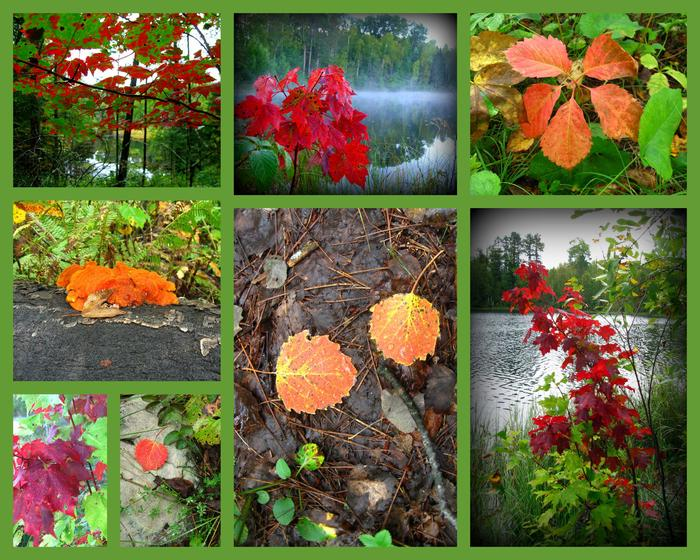 Chippewa sample of fall colorssample of fall colors