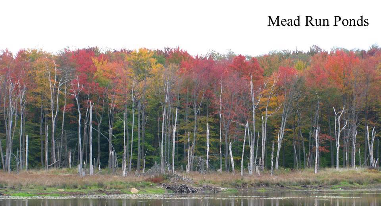 Mead Run Ponds