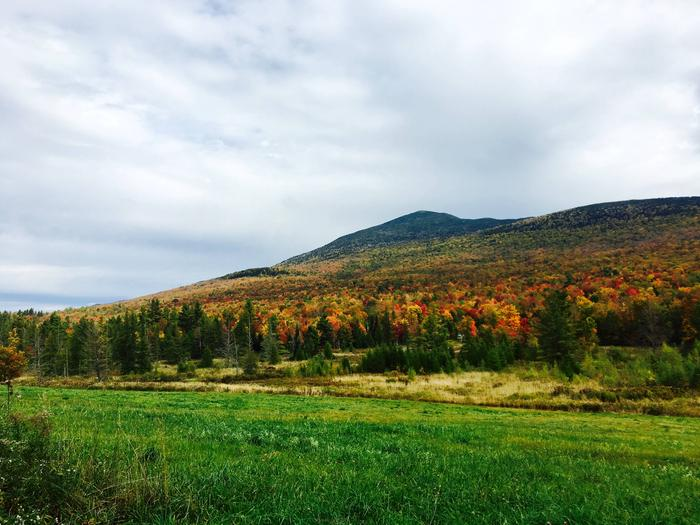 Green Mountain & Finger Lakes National ForestsFall Colors