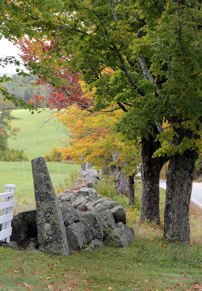 Green Mountain & Finger Lakes National Forests Fall