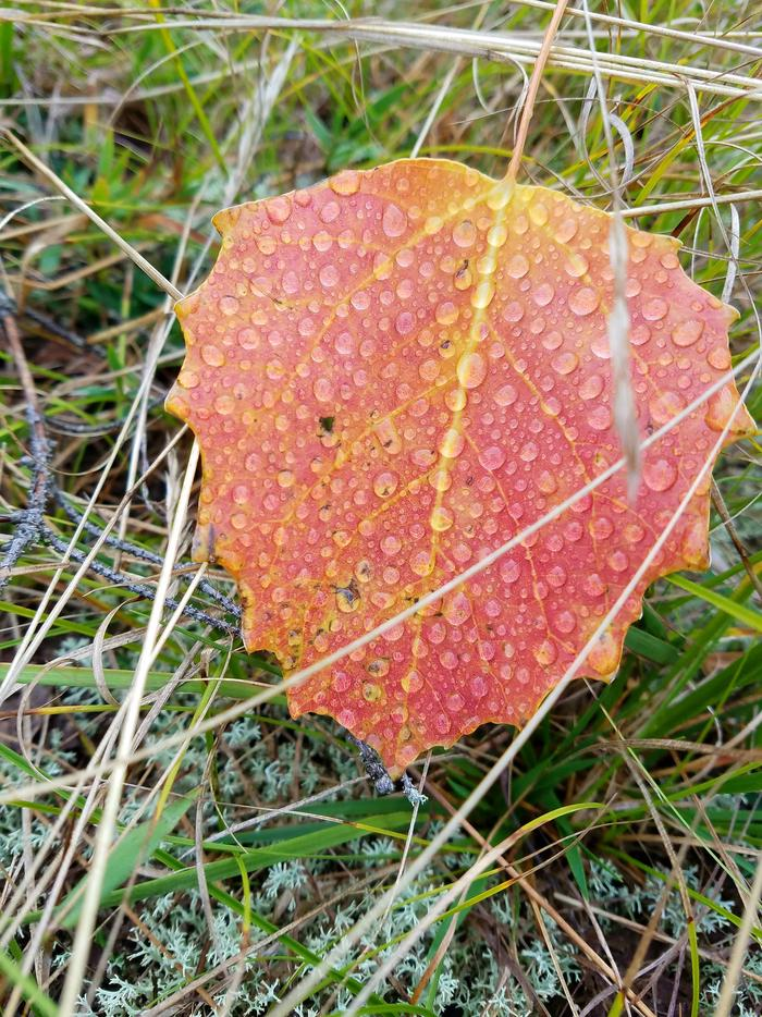 Hiawatha National Forest Fall colors