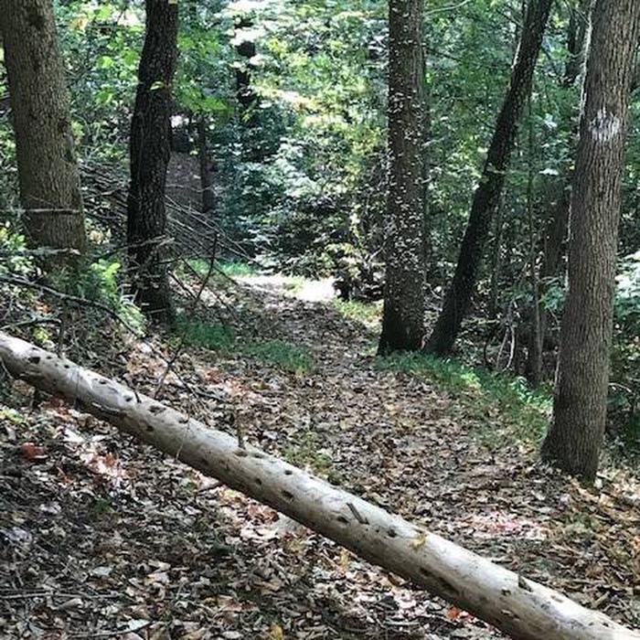 Hoosier National Forest Trail